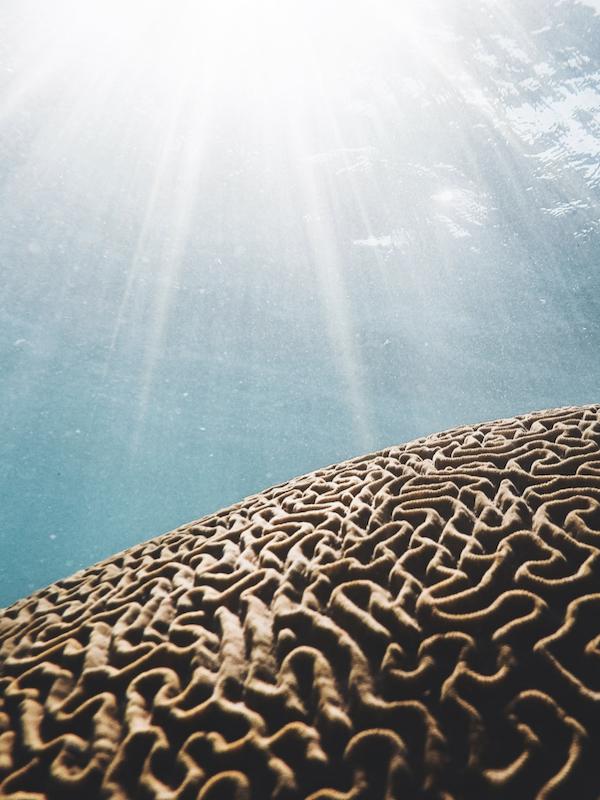 Neuroscienze ed emozioni